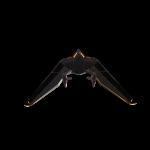 terminus_glider_5